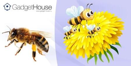 перга пчелиная: полезные свойства, как принимать, рецепты